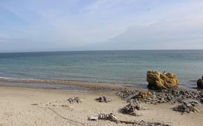 Картинка пляж, камни, Море, чайка, декор