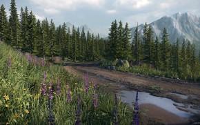 Обои daytime, лес, горы, Mountain Lodge, дорога