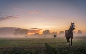 Картинка поле, лето, небо, пейзаж, природа, туман, рассвет, кони, утро, деревня, лошади, пастбище, домики
