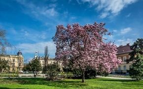 Картинка Хорватия, магнолия, цветущие деревья, Croatia, Flowering trees, Загреб
