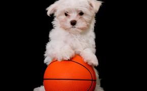 Картинка мяч, собака, щенок