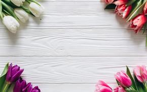 Картинка цветы, букет, colorful, тюльпаны, розовые, white, белые, fresh, wood, pink, flowers, beautiful, tulips, spring, purple, ...