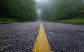 Обои туман, дорога, утро