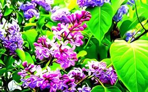 Картинка листья, цветы, рендеринг, вектор, ветка, сирень