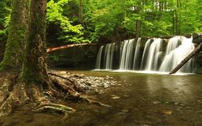 Картинка лес, вода, деревья, камни, водопад