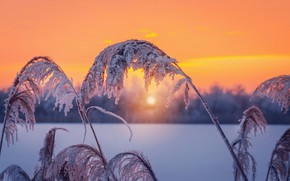 Картинка иней, камыш, зима, закат