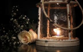 Обои цветок, роза, фонарь