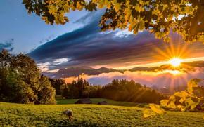 Обои лучи, домики, горы, веки, корова, деревья, листья, зелень, луг, облака, солнце, небо, трава, лес
