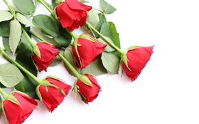 Картинка цветы, розы, букет, красные, red, love, wood, flowers, romantic, roses