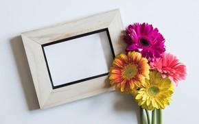 Картинка цветы, рамка, colorful, герберы, pink, flowers, spring, gerbera