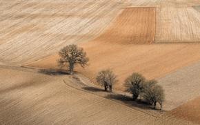 Картинка поле, деревья, природа