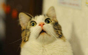 Картинка кот, взгляд, удивление