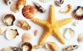 Картинка белый фон, ракушки, морская звезда
