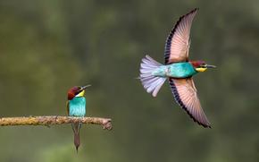 Картинка птицы, фон, ветка, полёт, щурки