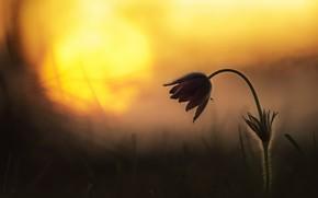 Картинка цветок, фон, весна