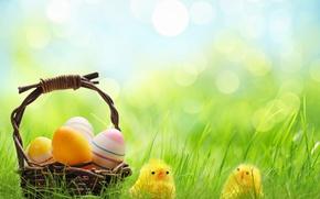Картинка трава, корзина, цыплята, яйца, весна, Пасха, holidays, боке, spring, Easter, eggs, basket, wicker, chickens