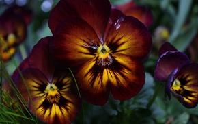 Картинка Макро, Цветочки, Flowers, Macro