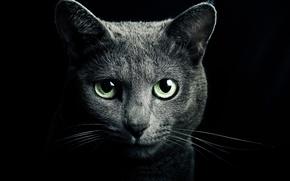 Обои look, fur, darkness, Green eyes