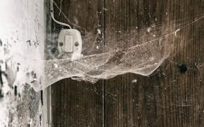 Обои макро, паутина, фон, выключатель