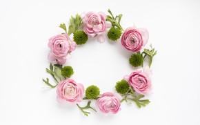 Картинка Pink, белый фон, декор, ранункулюсы, суккуленты, Decor, succulents