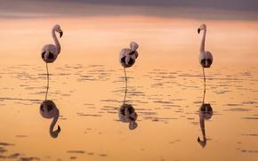 Картинка закат, птицы, фламинго