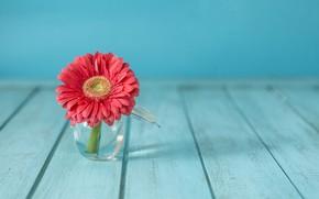 Обои цветок, ваза, flower, гербера