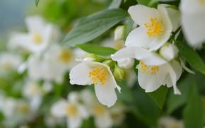 Картинка Весна, Spring, Flowering, Цветение