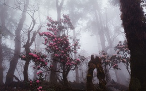 Картинка лес, деревья, цветы, природа, туман, дымка