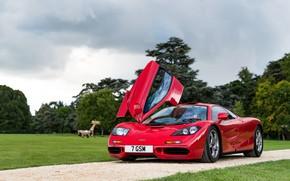 Картинка красный, парк, McLaren, спорткар, McLaren F1, F1