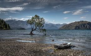 Обои лодка, озеро, дерево