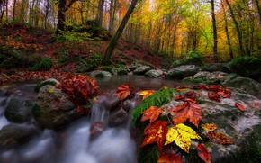 Обои лес, осень, пейзаж, ручей, листья, деревья, природа, камни
