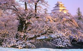 Картинка ветки, парк, замок, Япония, сакура, Japan, цветение, Фукусима, Fukushima, Aizuwakamatsu, Aizuwakamatsu Castle, Tsuruga Castle, Замок …