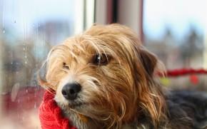 Картинка грусть, собака, окно