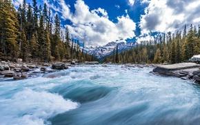 Картинка лес, деревья, горы, река, поток, Канада, Canada, Канадские Скалистые горы, Canadian Rockies