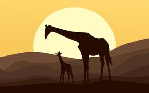 Обои закат, солнце, силуэт, вектор, животные, жираж