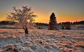Картинка зима, иней, поле, природа, дерево, утро