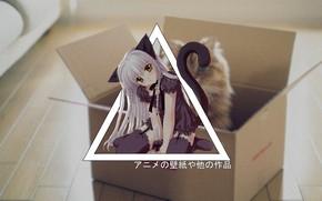 Картинка anime, cat, DxD, madskillz, koneco