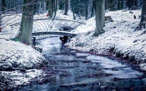 Картинка снег, парк, Netherlands, Guelders, Velp
