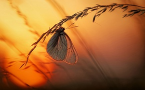 Картинка трава, солнце, макро, свет, закат, бабочка