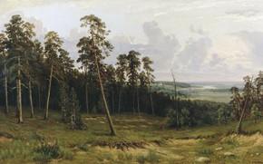 Обои холст, картина, масло, Опушка Леса, деревья, Иван Шишкин, лес, пейзаж