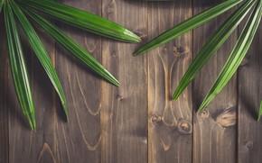 Обои листья, фон, дерево, доски, wood, texture, leaves
