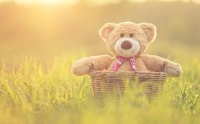 Картинка корзина, игрушка, медведь, мишка, vintage, bear, retro, teddy, одинокий, cute, lonely