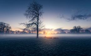 Картинка field, morning, fog, sunrise, dawn, London, England, Morden Hall Park