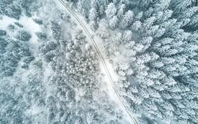 Обои путь, forest, природа, зима, дорога, tree, елка, way, road, nature, лес, winter