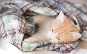 Картинка кот, лежит, плед