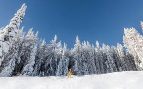 Картинка зима, снег, лыжник