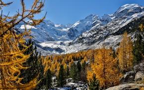 Обои Швейцария, Альпы, горы, Switzerland, Morteratsch Glacier, деревья, Ледник Мортерач, Бернина, Bernina Range, Alps, осень