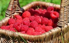 Обои красота, природа, дача, ягоды, вкусно, малина, урожай, лето, витамины, корзина, ягода