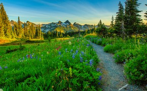 Картинка деревья, цветы, горы, луг, США, тропинка, штат Вашингтон