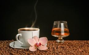 Картинка цветок, вино, бокал, кофе, горячий, пар, чашка, напиток, черный фон, орхидея, блюдце, зёрна, боке